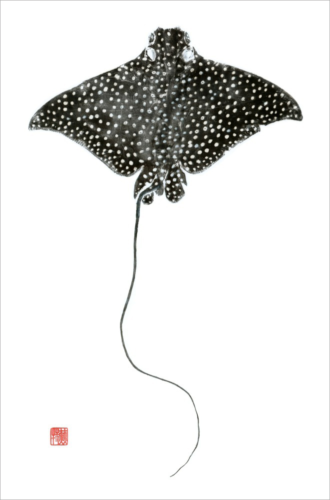 Spotted eagle ray, Heather Fortner.